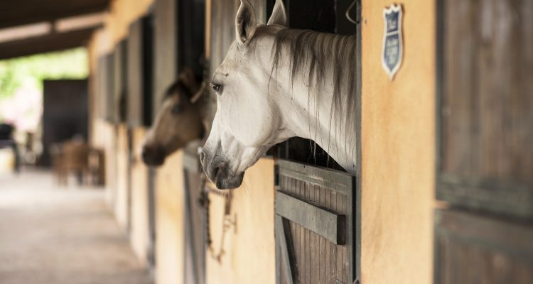 horse-237