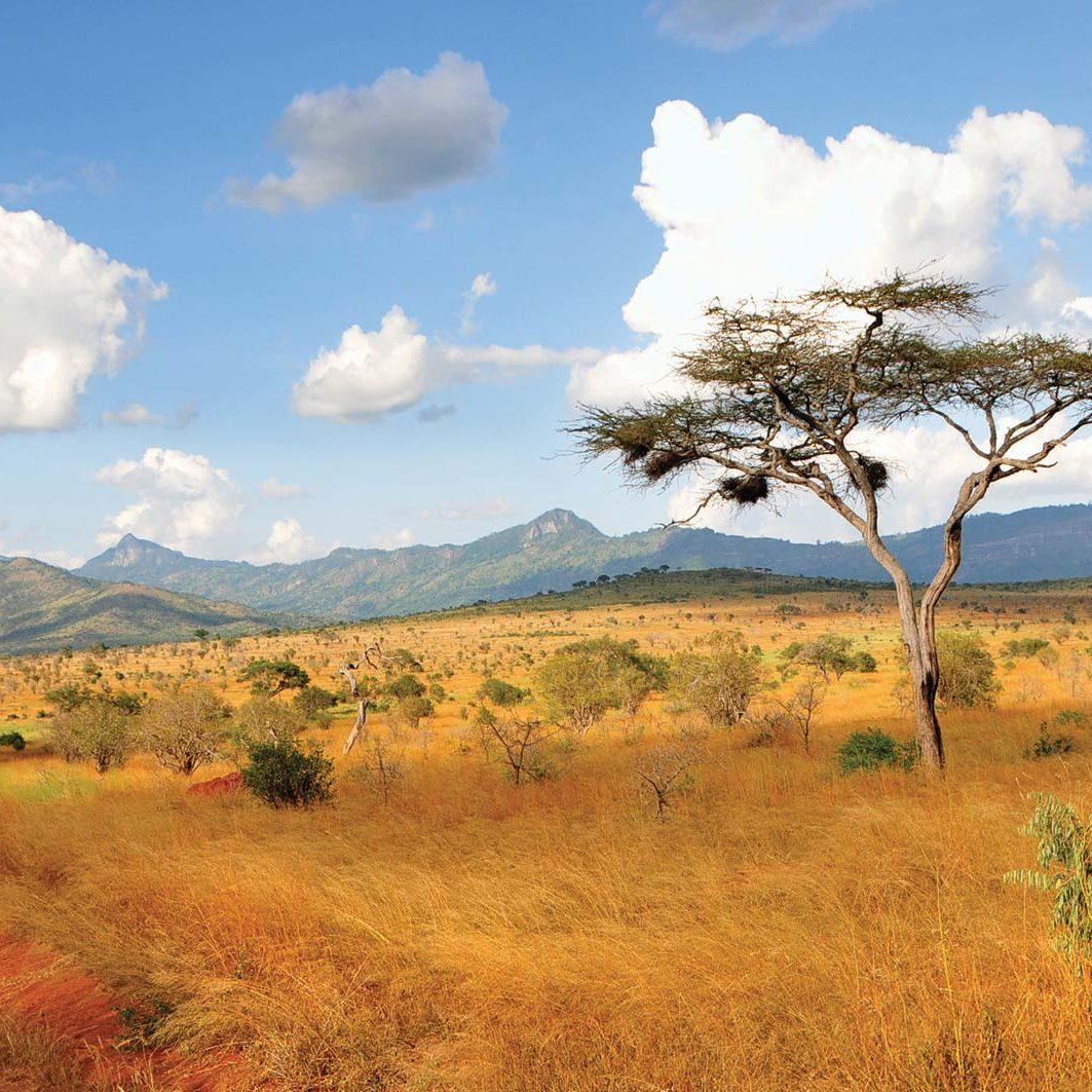 Acacia-trees-Taita-Hills-Kenya
